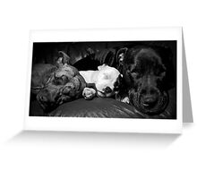 Cookie,Molly,Alfie - the Staffie Family Greeting Card