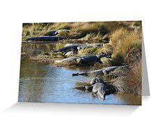 Alligators Abound Greeting Card