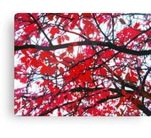 Red leaves branches Canvas Print