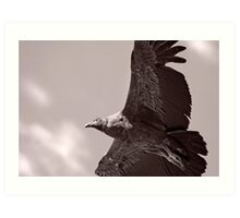 Condor Close, Colca Canyon, Peru Art Print
