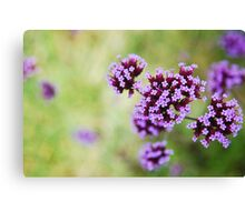 Close Up of Flower Canvas Print
