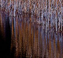 Reed the Lines by Jeannette Sheehy