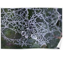 Dew Drops on Spider Web Poster