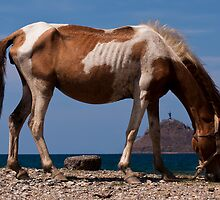 The hungry horse of Dili by David Baird