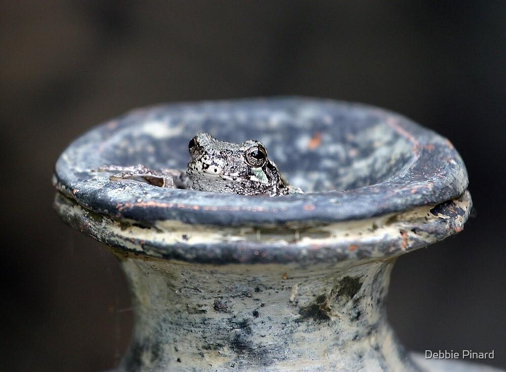 Cammo Tree Frog - Dunrobin Ontario by Debbie Pinard