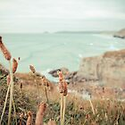 Weeds at the Beach by scottseldon