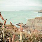 Weeds at the Beach by scottseldon
