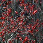 Winter Berries by Jeannette Sheehy