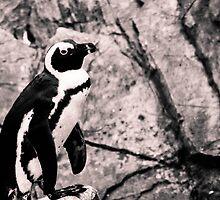 Hungry Penguin by scottseldon