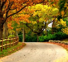 Colorful Country Road in Autumn by Monica M. Scanlan