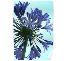 Designer Bloom Poster