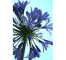 Designer Bloom Photographic Print