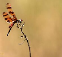 Dragonfly On the Point by Sabrina Ryan