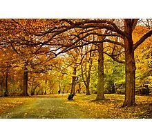 Autumn marathon Photographic Print