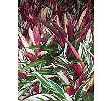 explosion of wonderous colours Photographic Print