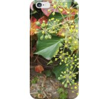Autumn Colors and Foliage on the Harsimus Branch Embankment, Jersey City, New Jersey iPhone Case/Skin