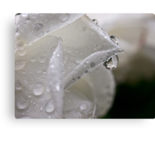 Raindrop rose refractions Canvas Print