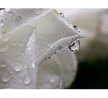Raindrop rose refractions Photographic Print