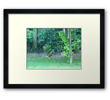 The Crazy Rooster sprint Framed Print