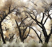 Cottonwood Trees in Autumn by Denice Breaux