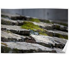 Moss on Roof Poster
