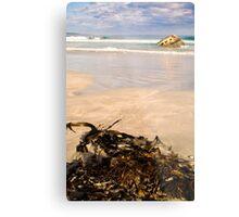 Seaweed at Carpenter Rocks Metal Print