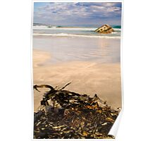 Seaweed at Carpenter Rocks Poster