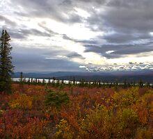 Alaska Tundra by exploringfox