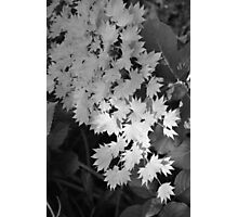 Cascade of Leaves Photographic Print