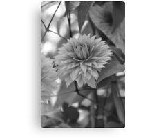 Gentle Flower Canvas Print