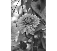 Gentle Flower Photographic Print