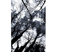 Surrounded by Trees Photographic Print