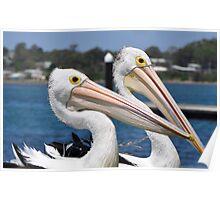 Pelican Rocks  Poster