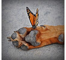 The Courage Of A Butterfly! Photographic Print