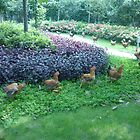 A Cute Little Chicken Parade by Joseph Green