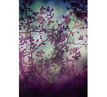 Midsummer Night Photographic Print