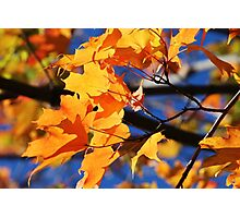 Rainbow of Autumn Colors Photographic Print