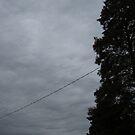 November Skies 10 by dge357