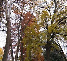 Fall Series 84 by dge357