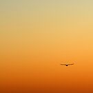 Bird in the sky by Antanas