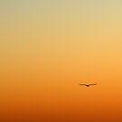 Bird in the sky by Antanas