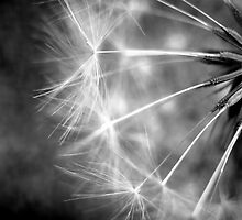 Make a Wish (Black and White Version) by Sarah Donoghue