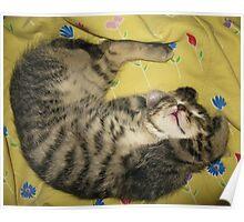 Kitten dreaming♥ Poster