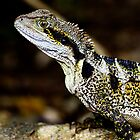 Female Water Dragon by john  Lenagan