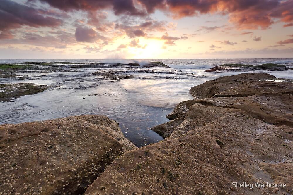 Seaside of Your Dreams by Shelley Warbrooke