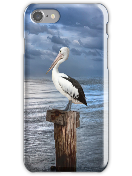 Pelicans Pride by Shannon Rogers