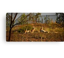 Wildlife in Suburbia Canvas Print