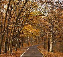 Fall Drive  by Carol Bock
