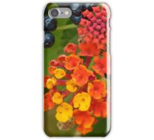 Candy in Bloom iPhone Case/Skin