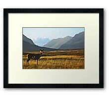 Wild Red Deer Grazing Framed Print
